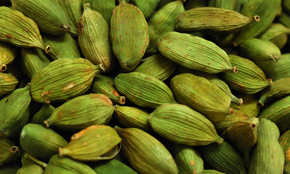 cardamom processing facilities